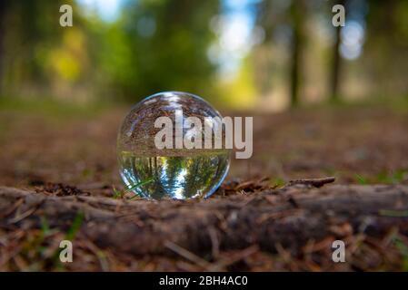 Une boule de verre sur un chemin forestier.