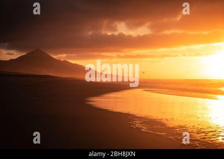 Golden beau coucher de soleil rouge à la plage avec des mouettes volantes pour la liberté et le concept de vacances - personne dans un endroit tropical sauvage pittoresque avec l'océan et les montagnes - calme et paysage de paix sur les côtes de vacances d'été