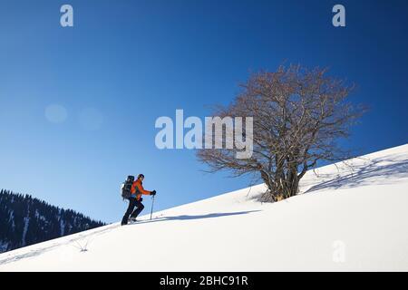 Homme ski sur neige poudreuse près de lonely tree against blue sky dans les montagnes Banque D'Images
