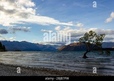 Lac Wanaka Tree au coucher du soleil - l'arbre le plus photographié en Nouvelle-Zélande Banque D'Images