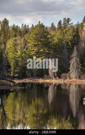 Bel éclairage et réflexions tard le printemps dans un étang d'Algonquin