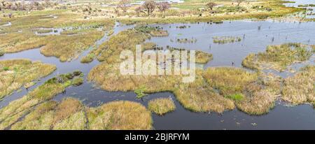 Hippo piscine avec beaucoup d'animaux dans le Delta d'Okavango, au Botswana, aérienne chaude faite d'un hélicoptère Banque D'Images