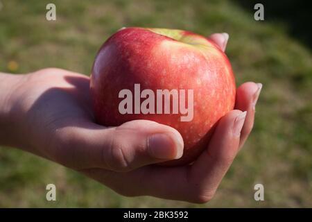Quelqu'un tenant une pomme rouge à l'extérieur