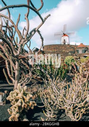 Jardín de Cactus, Lanzarote Banque D'Images