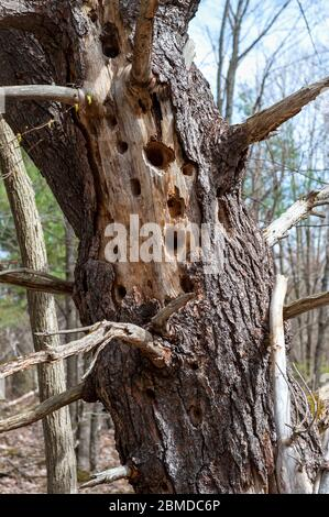 Trous dans le tronc d'arbre mort Banque D'Images