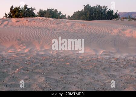 De belles vagues de sable sur les dunes de Sunrise dans les dunes de sable plat de Mesquite avec des plantes vertes, Grèce, Elafonisy