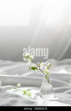 fleur sauvage nature blanche en verre flacon scientifique pour la recherche cosmétique biologique concept avec tissu blanc doux fenêtre lumière du soleil fond