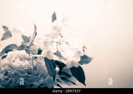 Fond de fleurs de printemps en filtre noir et blanc vintage, avec pivoine (paeonia) et orange mock (philadelphus). Bouquet rétro avec filtre BW gros plan wal Banque D'Images