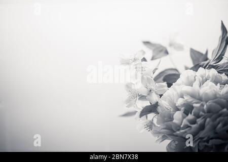 Le fond des fleurs printanières est noir et blanc, avec pivoine (paeonia) et orange mock (philadelphus). Papier peint gros plan bouquet BW avec espace de copie sur l Banque D'Images
