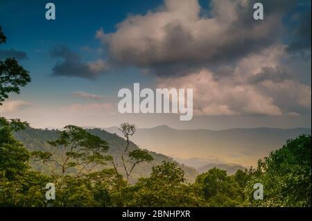 Lumière du soir dans la forêt tropicale luxuriante de Cerro Pirre, parc national de Darien, province de Darien, République du Panama
