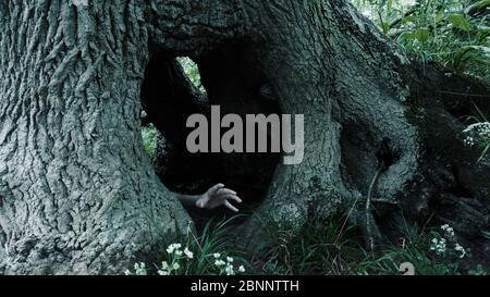 Un concept d'horreur de la main fantôme effrayante sortant d'un trou dans un vieux arbre Banque D'Images