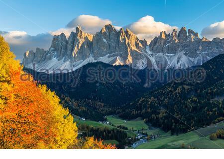Cerisiers colorés en automne au coucher du soleil devant les Odles ou Geislerspitzen, Parc naturel de Puez-Odle, Villnoess, Funes, Vallée de Villnoess, Val di Funes, province de Bozen, Haut-Adige, Tentino, Tyrol du Sud, Italie Banque D'Images