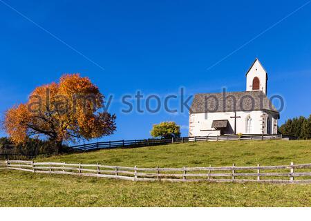 Église Saint-Jakob et cerisier rouge sur un pré, automne, Vallée de Villnoess, Val di Funes, province de Bozen, Haut-Adige, Tentino, Tyrol du Sud, Italie Banque D'Images