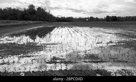 champ après une tempête avec le ciel réfléchi dans une flaque d'eau Banque D'Images