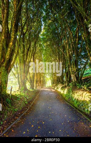 Voir une downd allée bordée d'arbres dans un hôtel au Costa Rica