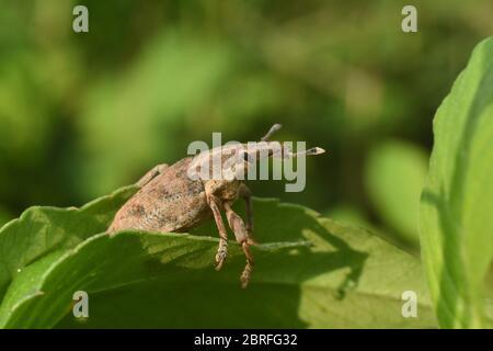 Gros plan sur la photo du petit insecte dans la nature Banque D'Images