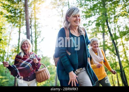Des femmes âgées se promou en plein air en forêt. Banque D'Images