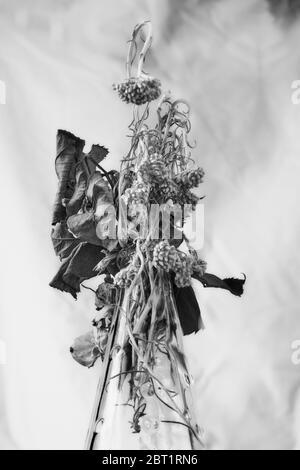 Séchage de la rose et de la sauge dans un vase en verre devant un fond blanc Banque D'Images