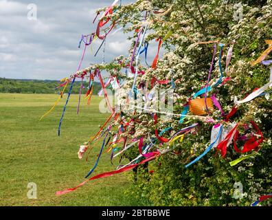 Wish Tree hawthorn couvert en mai, fleurir des rubans colorés et des voeux sur les Downs à Bristol pendant la pandémie de Corinavirus de 2020 Banque D'Images