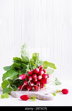 Récolte printanière radis rouge sur fond clair. Bouquet de radis frais pour le petit déjeuner français. Légumes en pleine croissance. Plats végétariens.