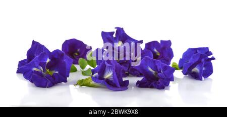Fleur de pois de papillon isolée sur fond blanc Banque D'Images
