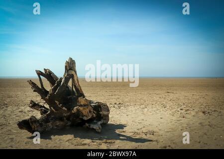 Driftwood sur la plage