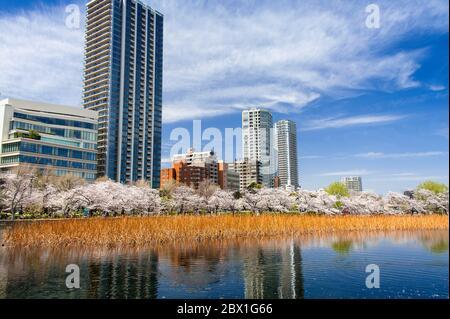 Cerisiers en fleurs et fond de ville se reflétant dans le lac au printemps. Parc Ueno, Tokyo Banque D'Images