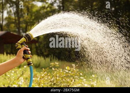 Arrosage des cultures de jardin avec un pistolet d'arrosage. Un jet d'eau ensoleillé. Banque D'Images
