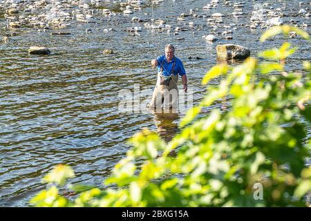 Kelso, frontières écossaises, Écosse, Royaume-Uni. 29 mai 2020. Ghilie PUD Murray lance une mouche pour le saumon sur la rivière Tweed dans la ville frontalière de Kelso. Le S Banque D'Images