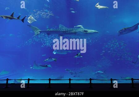 aquarium avec requin baleine à Okinawa Banque D'Images