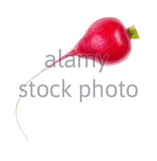 La racine fraîche bio de radis rouge isolé sur fond blanc Banque D'Images