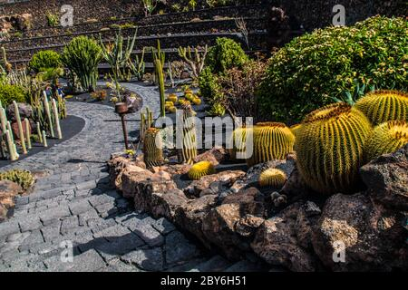 Vue sur le jardin tropical de cactus, jardin de cactus à Guatiza par Cesar Manrique, attraction populaire à Lanzarote, îles Canaries. Champ de Cactus et moulin à vent Banque D'Images