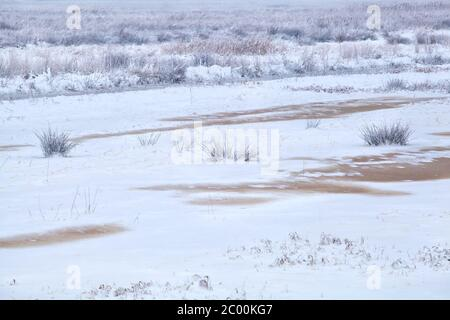 marais congelés en hiver Banque D'Images