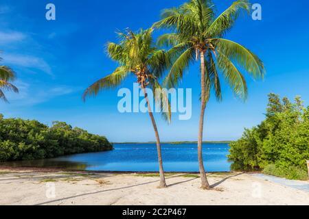 Palmiers sur une plage tropicale dans la région de Florida Keys.