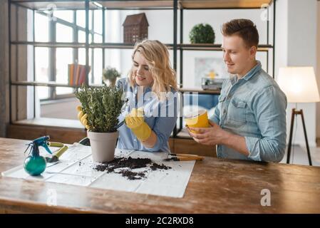 Jeune couple change le sol dans les plantes d'accueil, le passe-temps florististe. L'homme et la femme s'occupent et poussent des fleurs domestiques, jardinage