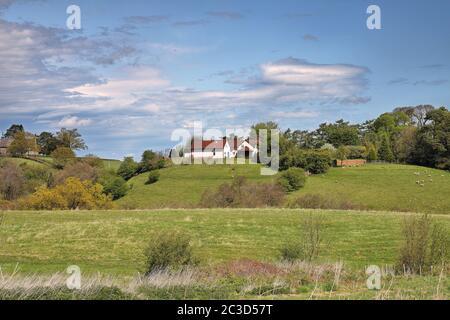 Un paysage rural à Shropshire, Angleterre avec des collines ondoyantes et des moutons de pâturage Banque D'Images