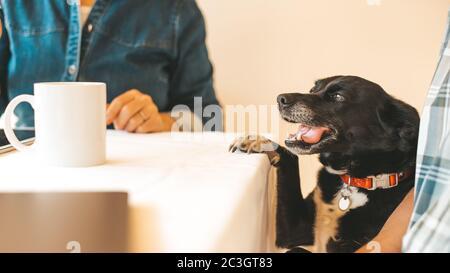 Un petit chien qui demande quelque chose à la table pendant que les propriétaires ont le petit déjeuner le matin. Image rognée, mise au point sur chien