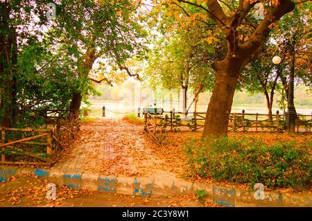 Jardin public en automne. Ambiance tranquille. Paysage naturel de parc. Environnement forestier. Jardin de feuilles d'érable Toronto Cit Banque D'Images