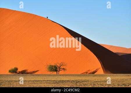 Dune No.45 au lever du soleil. Dune la plus populaire dans le monde entier, Namibie, Afrique Banque D'Images
