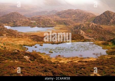 Les tarnes se trouvent sur le plateau de Haystacks, dans le district des lacs anglais