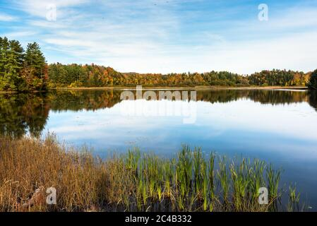 Ambiance tranquille avec un lac entouré de forêt, par une journée d'automne claire. Magnifiques couleurs d'automne et reflets dans l'eau.