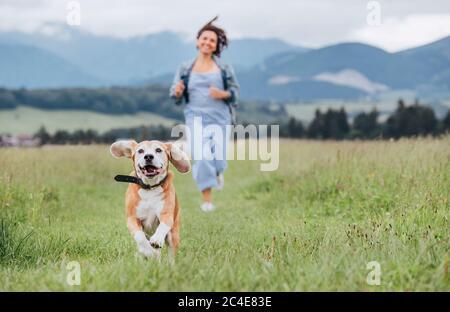 Portrait de chien de beagle souriant avec langue sortie et le propriétaire femelle jogging par le chemin de montage de l'herbe de prairie. Marcher dans la nature avec les animaux de compagnie, hap