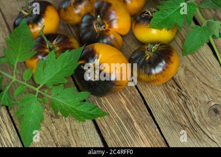 Tomates jaunes Alis Dream sur fond de bois. Récolte de tomates jaunes maison. Tomates jaunes brutes prêtes à manger Banque D'Images