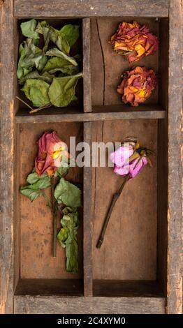 Rose pâle dans une boîte en bois Banque D'Images
