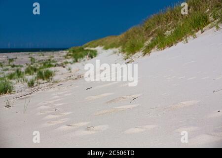 Mer Baltique, Allemagne, Mecklembourg-Poméranie occidentale, Darß, Prerow, bord de mer
