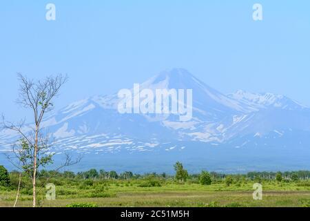 Volcan Avascha le matin, péninsule de Kamchatka, Russie Banque D'Images