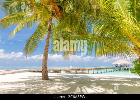 Vacances d'été sur une île tropicale avec une belle plage et des palmiers. Voyage de luxe, paysage exotique de plage, temps ensoleillé, tropiques