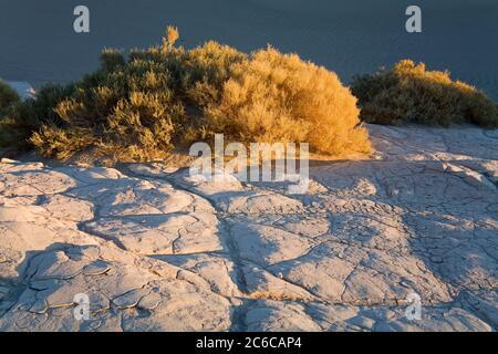 Boue séchée dans les dunes de sable de Mesquite Flat, parc national de la Vallée de la mort, Californie, États-Unis, Amérique du Nord