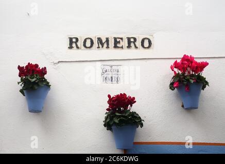 Espagne, Andalousie, Cordoue. Fleurs bleu pâle aux fleurs rouges et fenêtre typiquement bleue bordée d'un mur de patio blanchi à la chaux au printemps. Banque D'Images