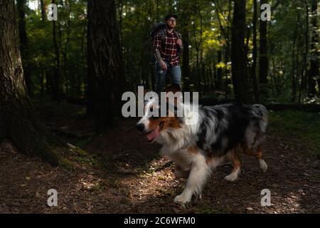 Chien australien avec Hiker Backpacker Man se promener et faire des randonnées dans la forêt. Banque D'Images